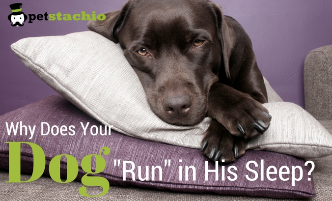 """Why Does Your Dog """"Run"""" in His Sleep?"""