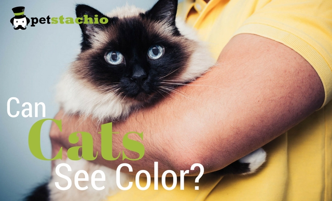 Can Cats See Color?