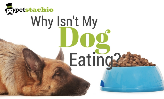 Why Isn't My Dog Eating?