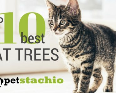 The Top 10 Best Cat Trees 2