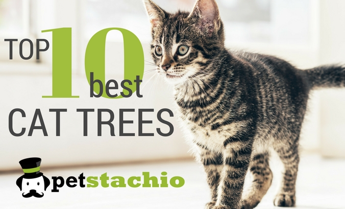 The Top 10 Best Cat Trees (Updated for 2018)