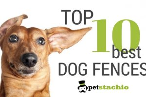 The Top 10 Best Dog Fences 3