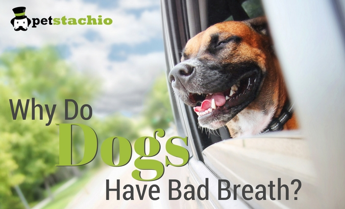 Why Do Dogs Have Bad Breath?