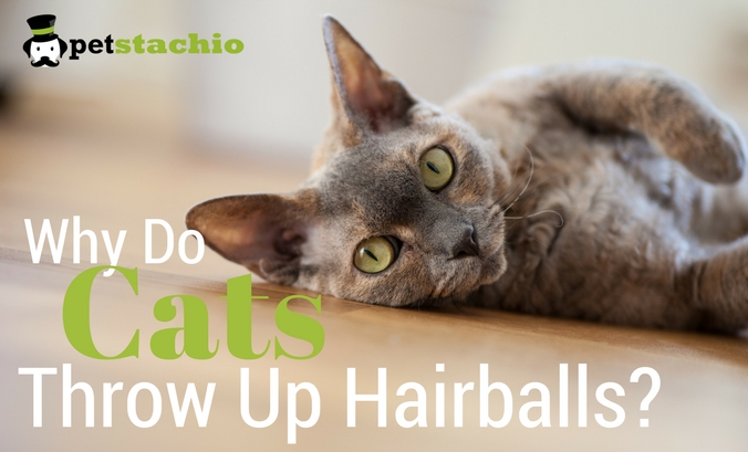 Why Do Cats Throw Up Hairballs?