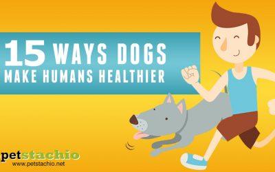 15 Ways Dogs Make Humans Healthier