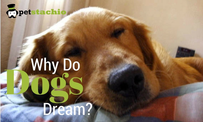 Why Do Dogs Dream?