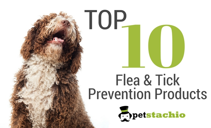 10-Best-Flea-and-Tick-Products 10 Best Flea and Tick Prevention Products for Your Pet