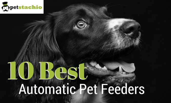 10 Best Automatic Pet Feeders