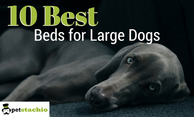 10 Best Beds for Large Dogs