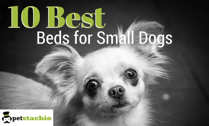 10 Best Dog Beds for Small Dogs