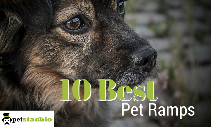 10 Best Pet Ramps